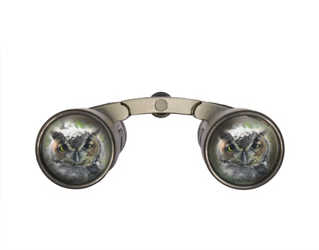 bird watcher: Binoculars with great horned owl; front view