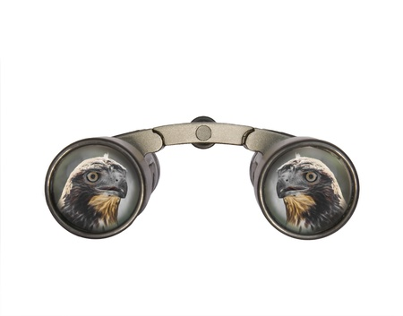 two visions: Binoculars, front view, showing the head of a juvenile red tailed hawk  Stock Photo