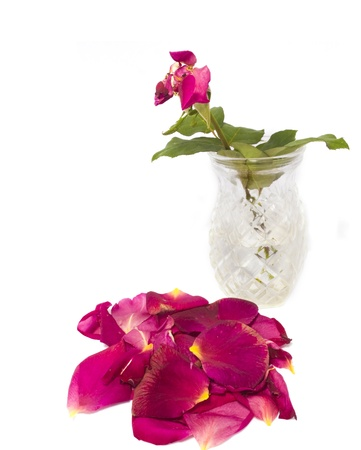 Rose petals gather at the base of a glass vase  Photo updated for copy space  photo