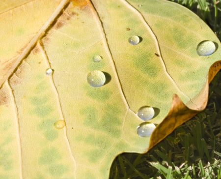 Close-up of water droplets on an autumn leaf in the grass  Stock Photo - 14933868