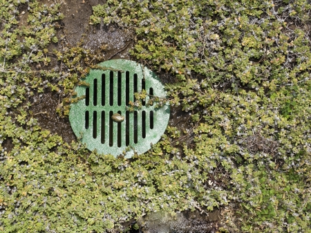 Water drain hole covered with a circular green metal grid sits in wet dirt amid ice plant groundcover