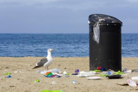 botar basura: Contemplando la basura Una gaviota curiosa mira a una papelera rebosante en la playa