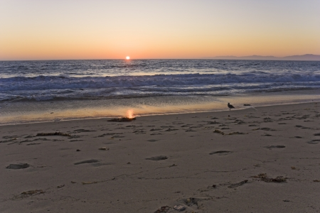 Seagull watching the sunset - a lone gull watches as the sun touches the horizon off the California coast  Stock Photo - 15588327