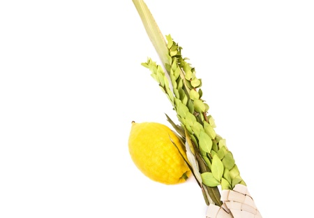 sukkot: Sukkot vacanza, lulav e etrog Il ramo di un albero di foglie, di salice e mirto palma sono legati insieme per creare il lulav Il etrog � un frutto luminoso giallo agrume conosciuto come il cedro, isolato su uno sfondo bianco Archivio Fotografico