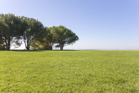 wide open spaces: Wide open green field  Large grassy landscape in a suburban park with trees in the background set against a clear blue sky