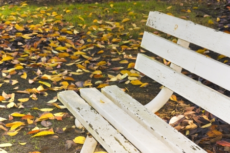 chipped: Shady, fall day  An empty, white wood bench sits in the shade amid many multicolored fallen autumn leaves  The bench is very old, dirty, with chipped paint