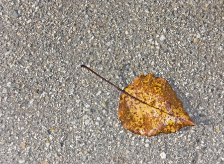 Fallen leaf on the hard pavement    Looking straight down on an autumn leaf laying on small stone pavement  Nice for a textured background  photo