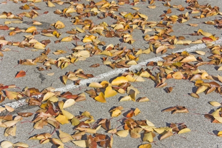 Scattered autumn leaves    Multi colored fall leaves lay scattered in a parking lot Stock Photo - 17153895