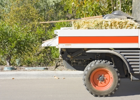 flatbed truck: Small flatbed truck  Back end profile of a loading truck parked on a paved road with curb carrying hay and shovels  Horizontal view  Green, leafy bushes in the background