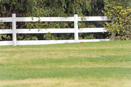 split rail: White wood split rail fence in the country   Post and rail wooden fence separates groomed lawn from dense brush  Painted fence is bright white color