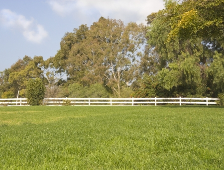 White, wooden split rail fence, field, and trees   Long post and rail wooden fence separates a green, grassy field from dense brush and trees  Painted fence is bright white color  Horizontal scene, blue sky and some clouds Stock Photo - 17947844