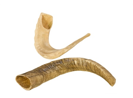 2 Shofars for Rosh Hashanah, the Jewish New Year   Rams horns, one a light color, the other a dark color, curved shape  Horizontal, isolated on a white background  photo