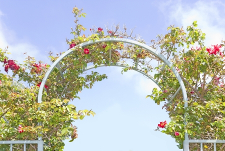 garden gate: Garden trellis against blue sky and cloud background   Overhead view of green leaves and red flowers growing on a blue metal arch  Horizontal photo  Stock Photo