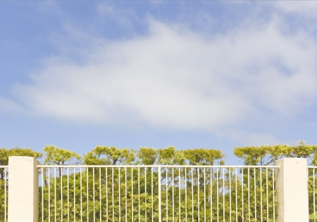 Trimmed green hedge growing behind the fence   Branches and green bushes spread out in a private garden protected by a metal fence with concrete posts  Blue sky and clouds in the background  Room for text, copy space Stock Photo - 20260094