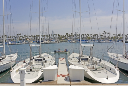 Side by side sailboats    Luxury boats tied at the dock at Naples marina, Southern California, near Los Angeles as a small motorboat speeds by  Horizontal scene, cloudy hazy blue sky  Palm trees, yachts in background  photo