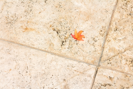 contrasting: Small solitary bright red and orange fall leaf on rough textured stone walkway  Concept of fragile fallen leaf contrasting with hard pavement  Paving material of large marbled slabs and grout lines  Horizontal scene