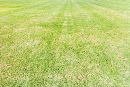 striping: Freshly mowed lawn   Large, green grass field  Striped pattern after mowing  Brown patches suggest drought  Wide angle view  Horizontal photo