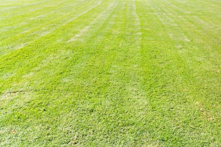striping: Newly mowed lawn   Large, green grass field  Striped pattern after mowing  Wide angle view  Horizontal photo
