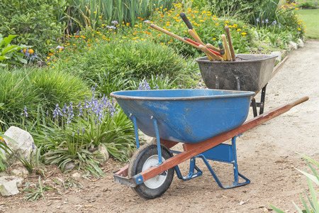 Two blue and black wheelbarrows with tools on garden dirt path   Metal bin, wood handle  Blooming orange flowers, green bushes  Horizontal nature photo  photo
