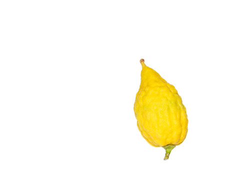 four species: Sukkot etrog isolated on white background with copy space   Bright yellow citrus fruit with green stem at bottom and round pitom on top. Used as one of the four species for the Jewish holiday. Room for text. Stock Photo