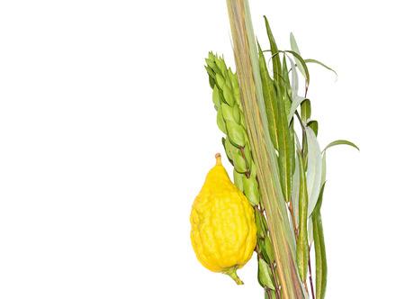 plants species: Festa ebraica di Sukkot quattro specie lulav e esrog isolato su sfondo bianco con copyspace Ramo di palma, salice e foglie di mirto, brillante etrog giallo. Camera per il testo, lo spazio di copia.
