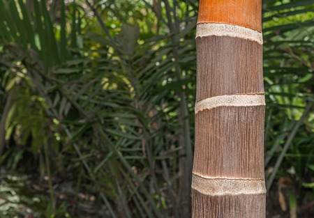 Close up view of thick brown and orange bamboo pole   High contrast lighting with dark background. Blurred green foliage background with room for text copy space. photo