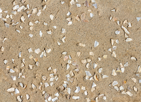 empedrado: Rough texture decorative outdoor paved floor of small shiny stone and seashell pieces, top down view.