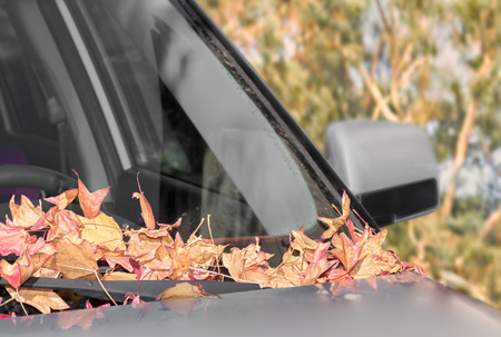 time passing: Fallen autumn leaves on dirty car windshield.   Shallow depth of field, focus on leaves. Blurred foliage background. Dry leaves in a pile on front window. Time passing concept.