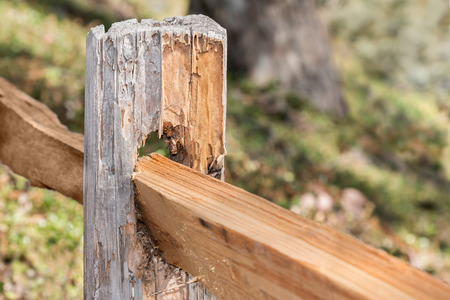 split rail: Old worn wooden split rail fence post.  Shallow depth of field, close up detail. Broken chipped and peeling wood surface. Lots of texture. Blurry green foliage and tree trunk base in blurry background. Stock Photo