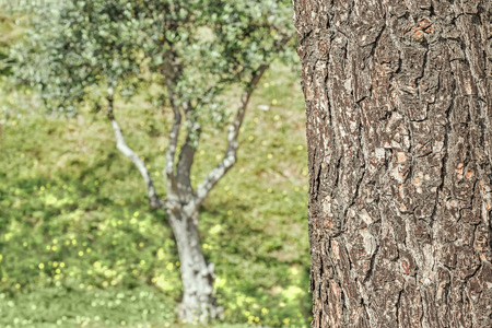 tree detail: Rough texture tree trunk close up detail.  Green leafy tree and field in blurred background. Stock Photo