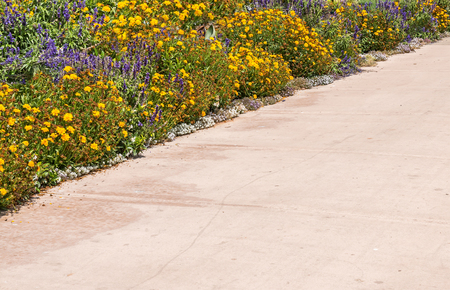 walkway: Colorful flowers on paved walkway.  Yellow, purple, white, and green colors against light reddish concrete. Bright sunny day.