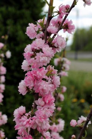 Flowers 免版税图像