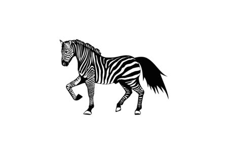 real zebra character design vector eps format Illustration