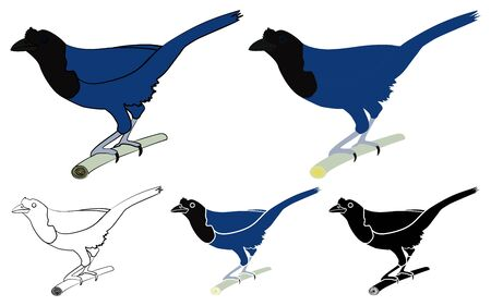 Blue Jay bird in profile bird Vectores