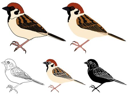 Sparrow bird in profile view