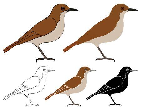 Joao de barro bird in profile view Ilustração