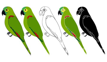 Real parrot bird in profile view Ilustração