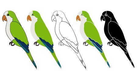 Caturrita bird in profile view Ilustração