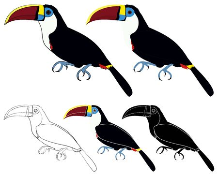 White throated Toucan bird colored