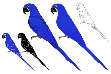 Blue macaw bird in profile view Vetores