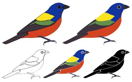 Painted Bunting bird in profile view. Vetores