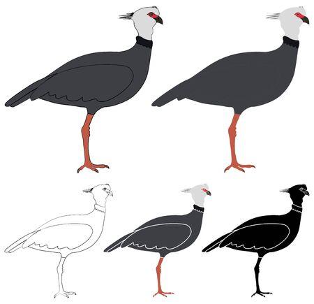 Tacha bird in profile view