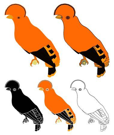 Cock of the bird bird in profile view