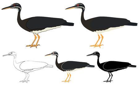 Pavaozinho do para bird in profile view