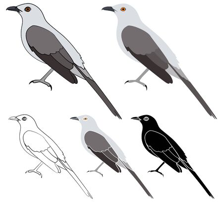 Did you know bird in profile view