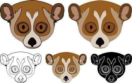 Pygmy Slow Loris animal in face view  イラスト・ベクター素材