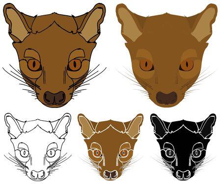 Pit, Animal of Madagascar in face view Ilustração