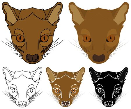 Pit, Animal of Madagascar in face view Illustration