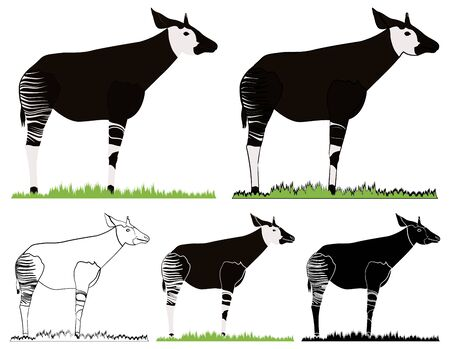 Okapi, African animal in front view Vecteurs