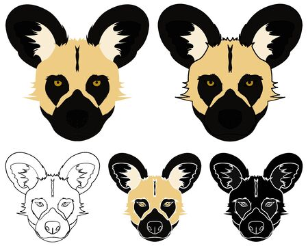 African wild dog in face view